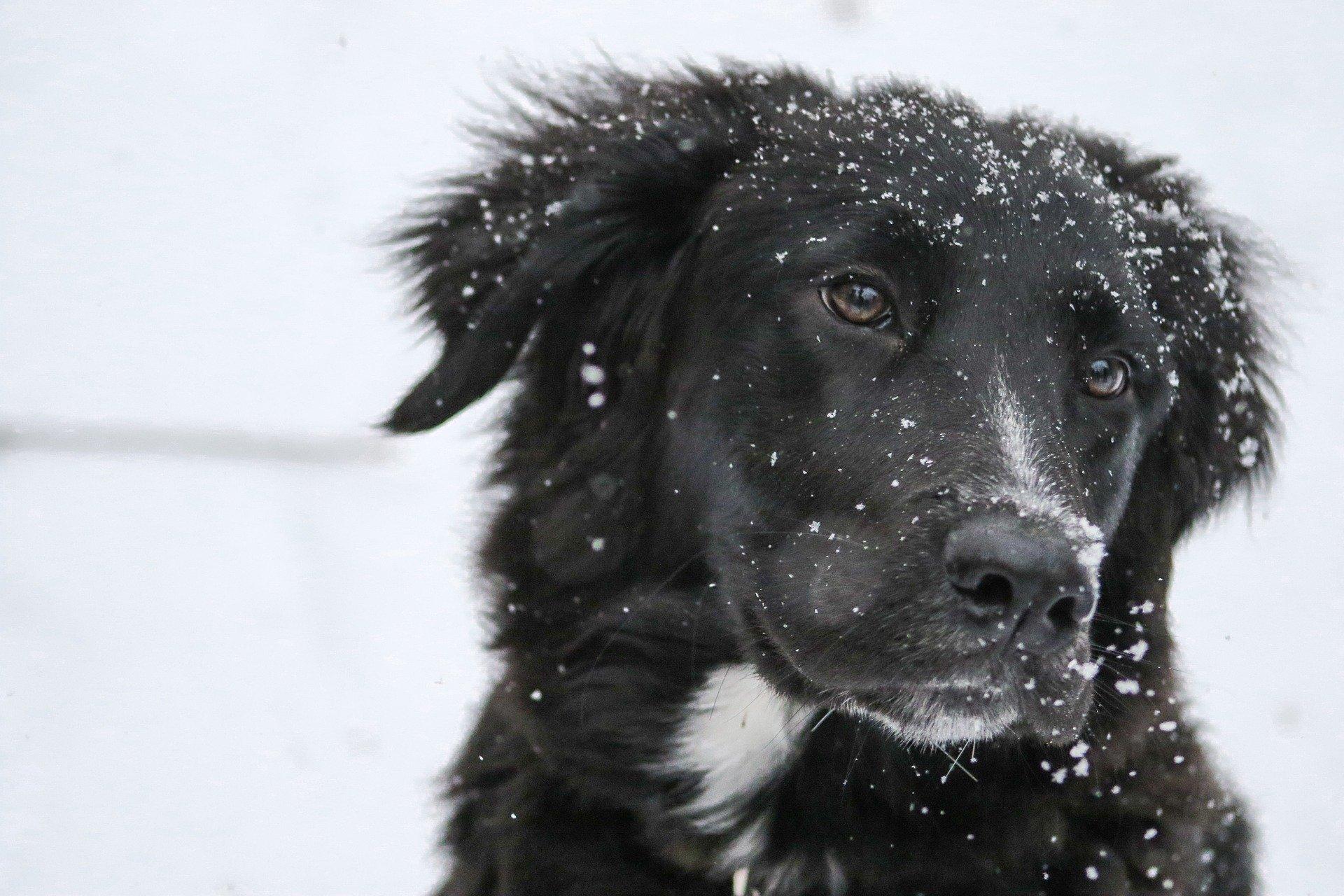 Zimski pes za zimske dni?
