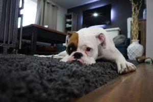 Lužica na preprogi – kako pravilno odreagirati?