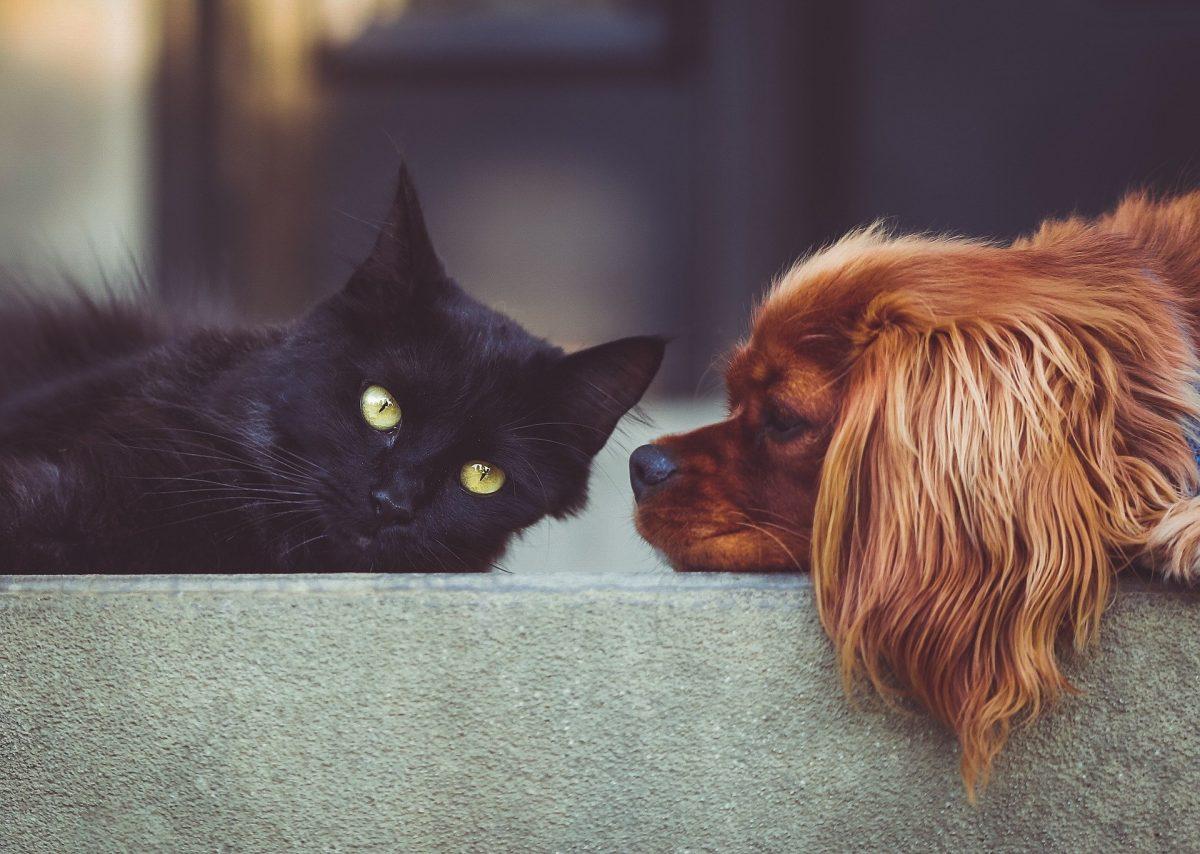Imajo ljudje res raje pse kot mačke?