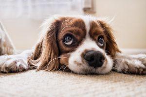 Ali imajo psi občutek za pravičnost?