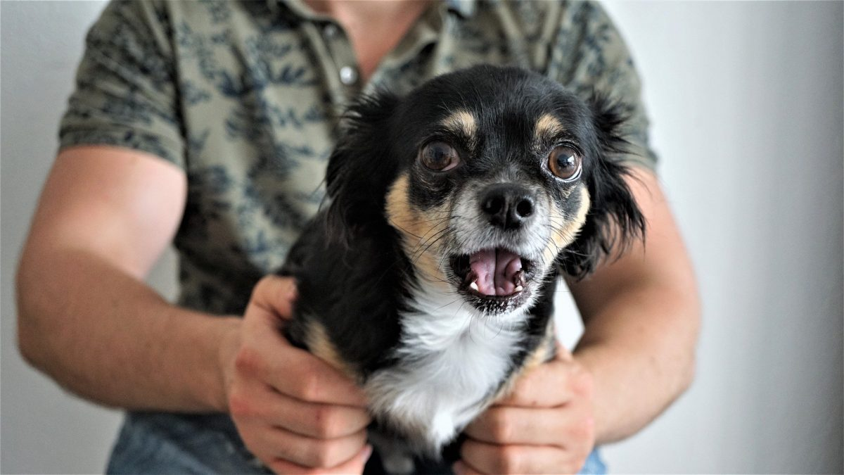 Kako zaščititi psa pred decembrskim truščem?