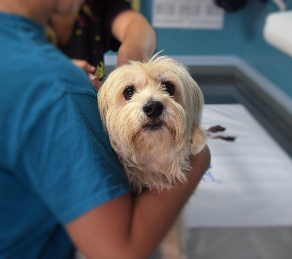 Ali nas morajo veterinarji obveščati o roku za cepljenje proti steklini?