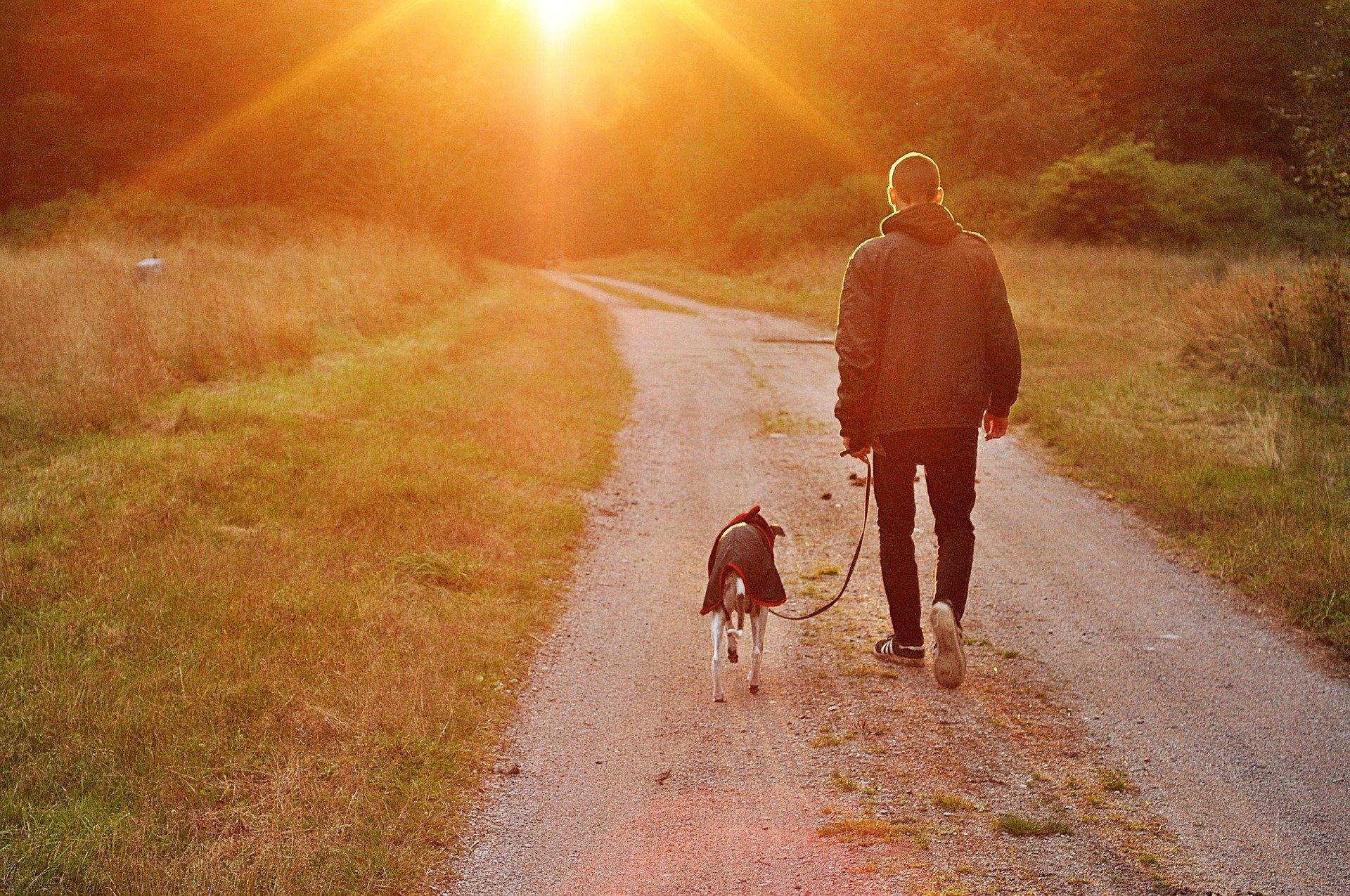 7 navad zelo učinkovitih lastnikov psov