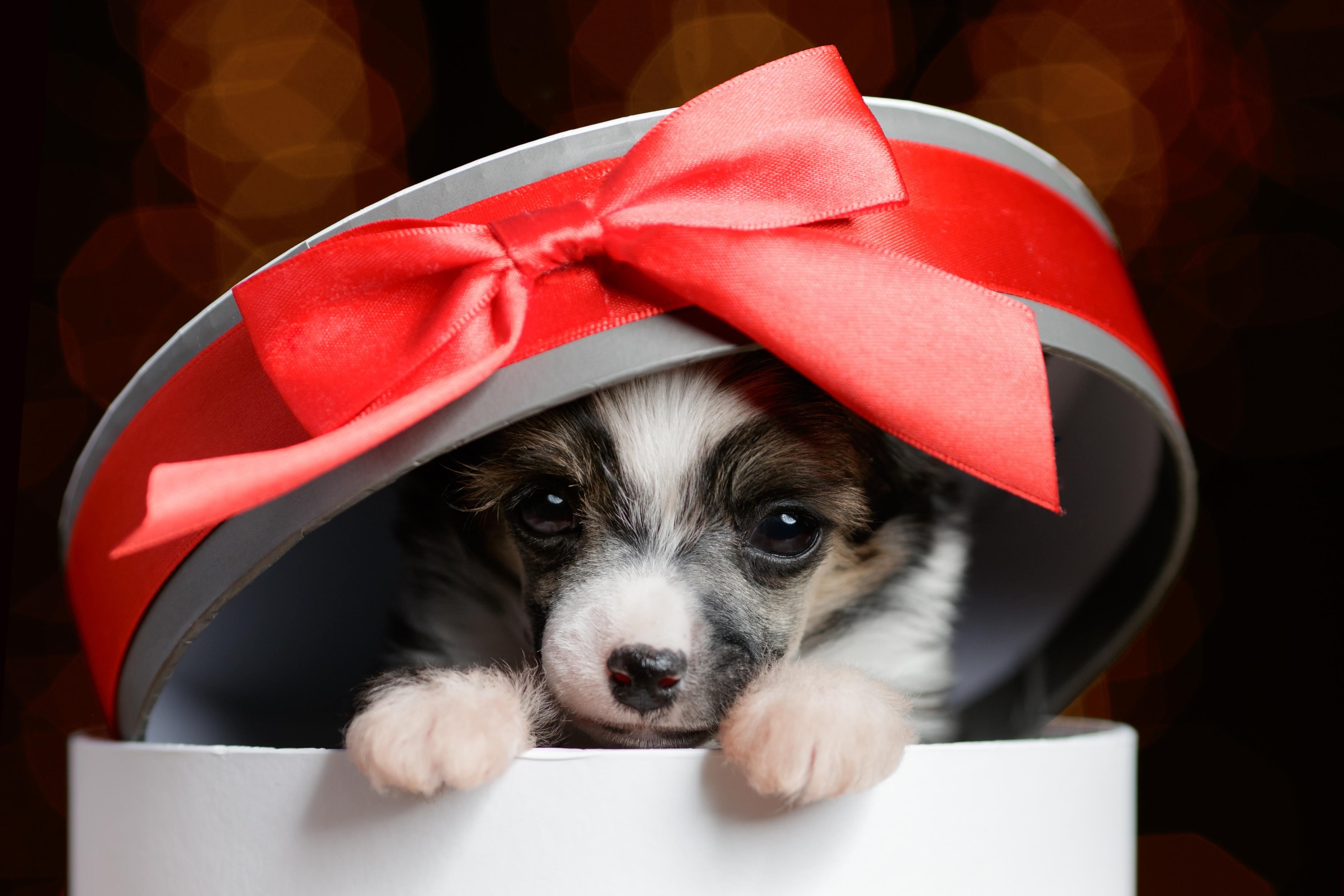 ''Žival je velika odgovornost, ne božično darilo''