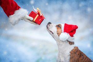 Postani Božiček za en dan zavetiškemu smrčku