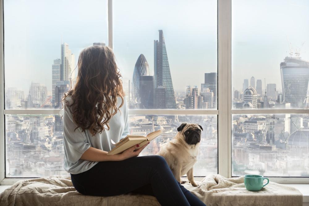 Išče se nekdo, ki bo za dobro plačilo pazil 2 psa in živel zastonj v Londonu