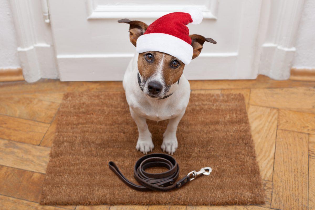 Kako psa pripraviti na praznike?