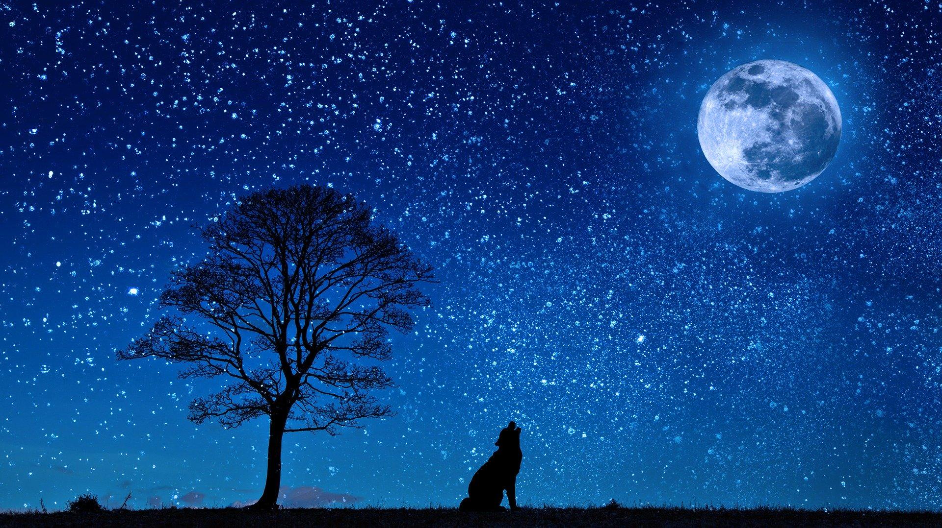 Pasji horoskop za december in januar