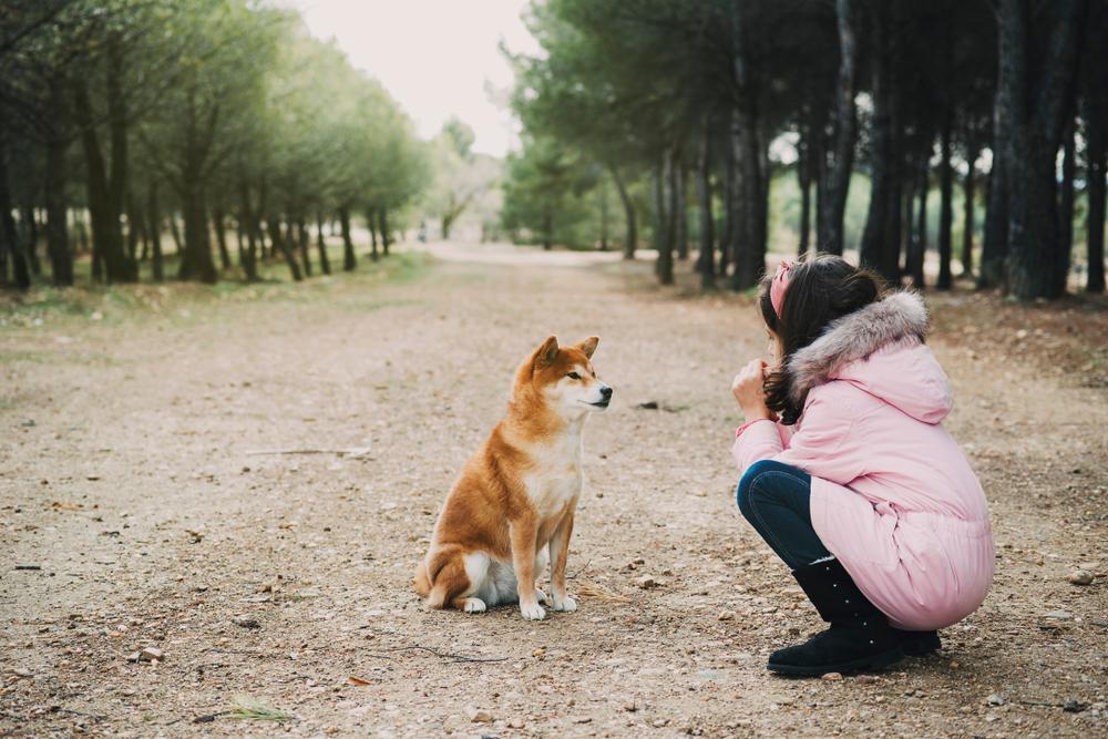 Komunikacija s psom: bodimo razumljivi