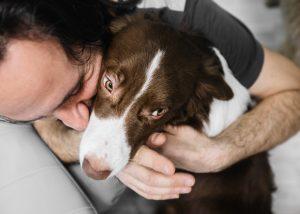 Hotel, v katerem lahko gostje (začasno) posvojijo zavetiškega psa