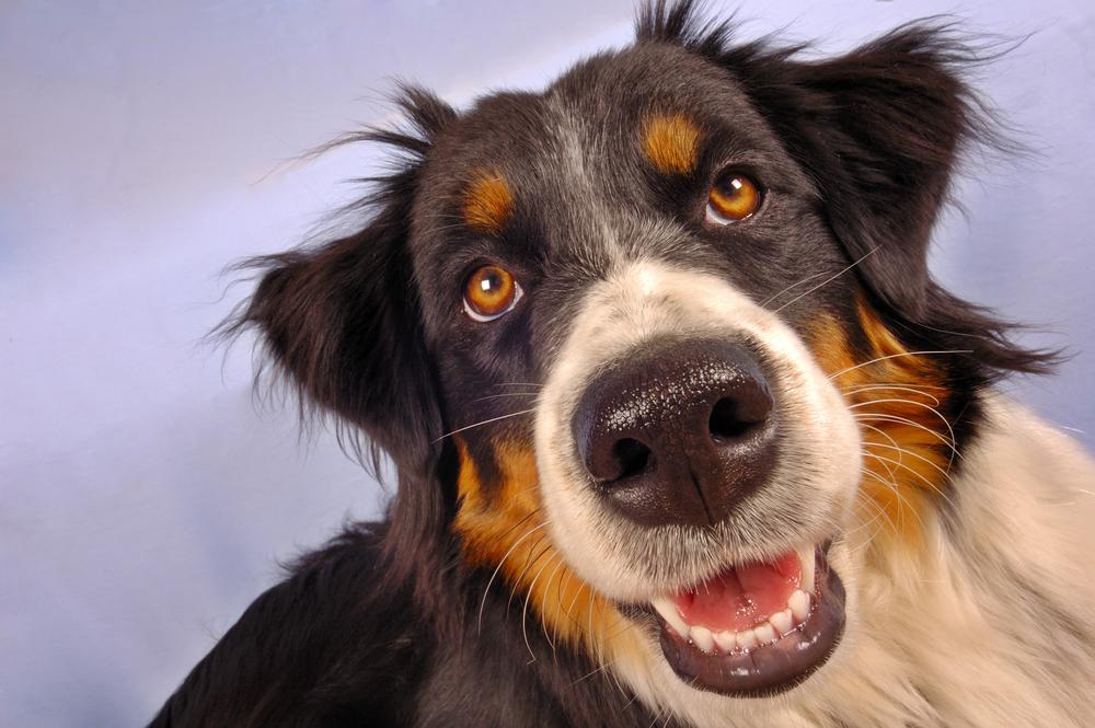 Zakaj imajo psi moker smrček?