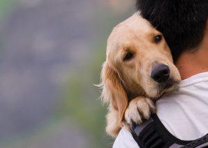 Od kod izhaja izraz, da je pes človekov najboljši prijatelj?