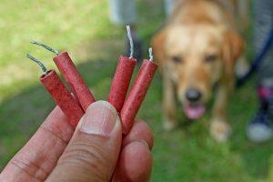Ali se metanje petard v bližini psa lahko označi kot mučenje živali?