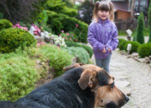 Srečanja otrok in psov
