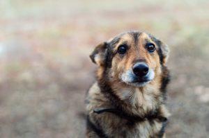 Del dohodnine lahko – namesto državi – namenite živalim