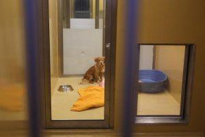 Ljubljana ima novo, sodobno Zavetišče za zapuščene živali