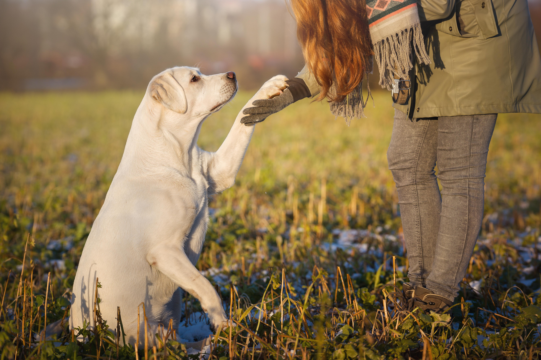 Če že vnaprej dvomimo, da bo psu uspelo, se to pogosto zares zgodi