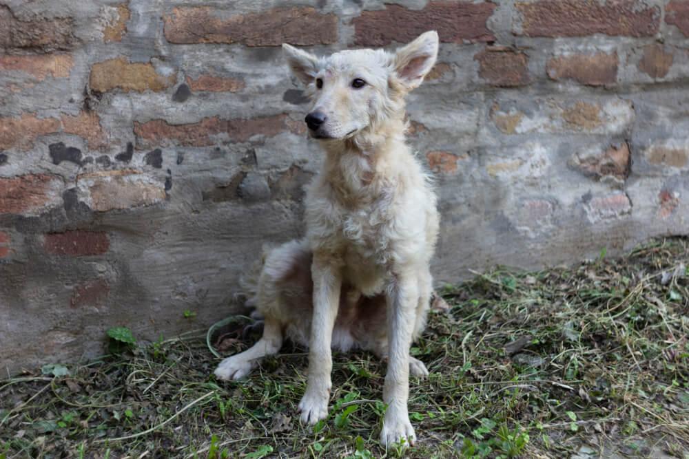 Zavetišče Horjul prevzema živali nekaterih gorenjskih občin