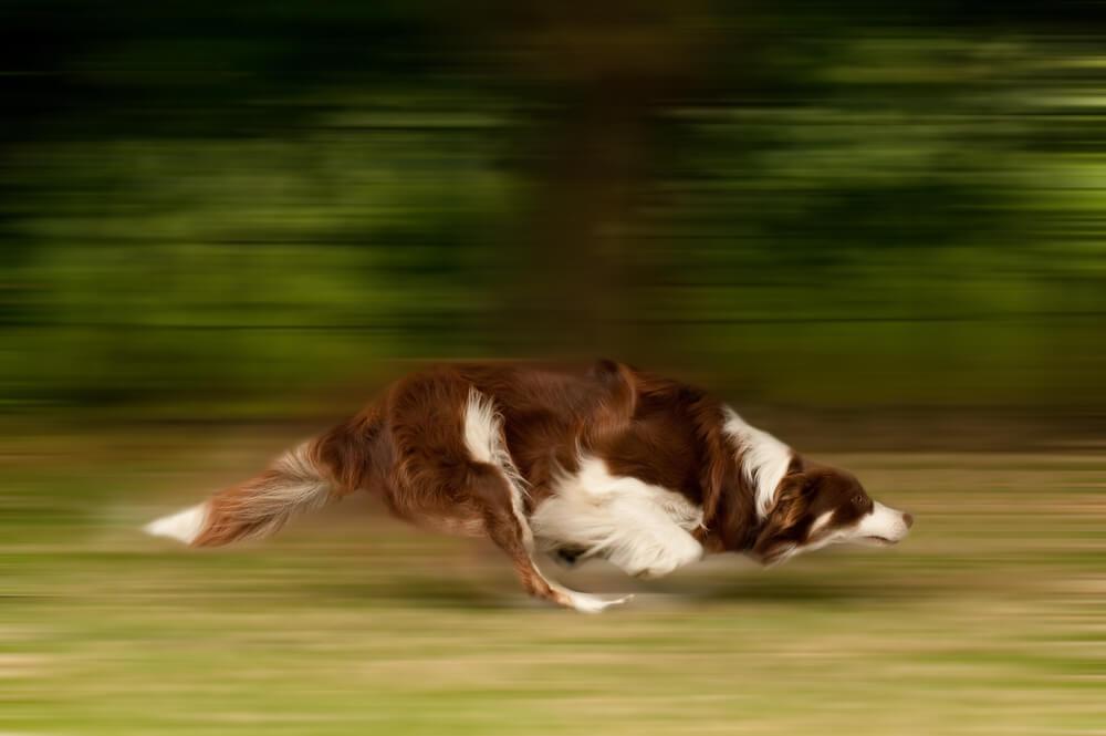 S pravim pristopom do manj možnosti za poškodbe psa