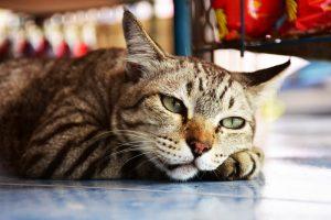Mačja telovadba: kako jih animirati?