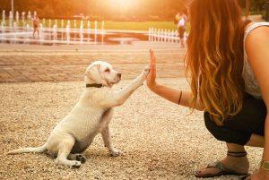 Vzgoja: z nekaj truda in znanja lahko vsi vzgojimo psa