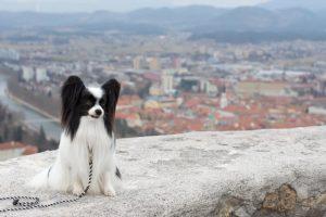 Celje ima zemljevid s psom prijaznimi točkami v mestu