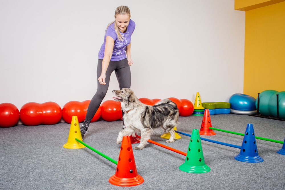 Komu lahko pomaga rehabilitacija (fizioterapija) psov?