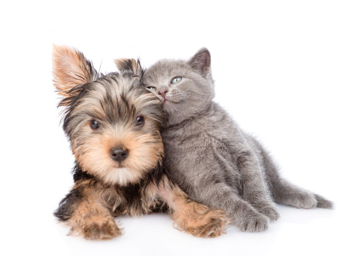 Psička rešila zapuščenega mačjega mladička in ga pripeljala domov