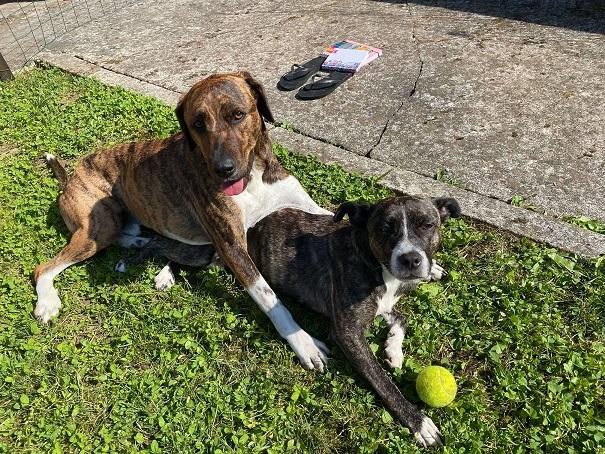Aljina zgodba: Dva psa in skupna selitev iz Kanarskih otokov nazaj v Slovenijo