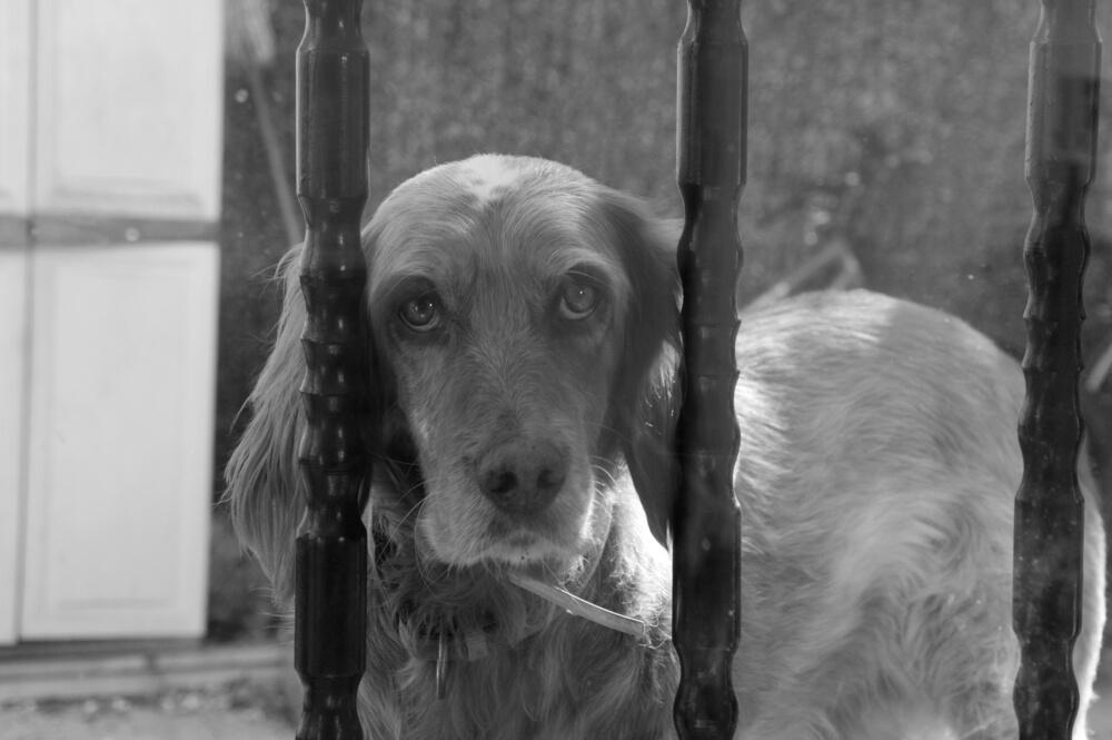 V cerkvi zapustil psa s sporočilom: ''tako zelo mi je žal''