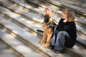 Nemška ovčarja skrbnici zavohala raka in ji rešila življenje