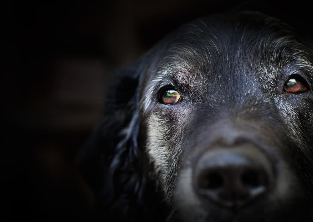 V Slovenijo prihaja avtorica uspešnice Modrost starih psov