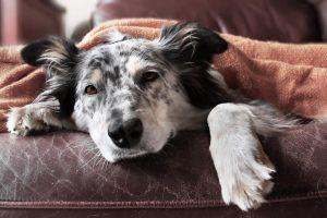 Kako vemo, da je naš pes bolan