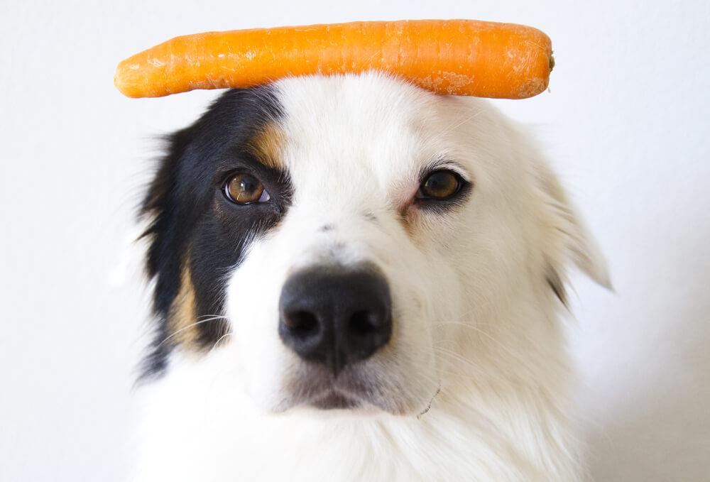 Surovo korenje za pse zdravo le, če je naribano