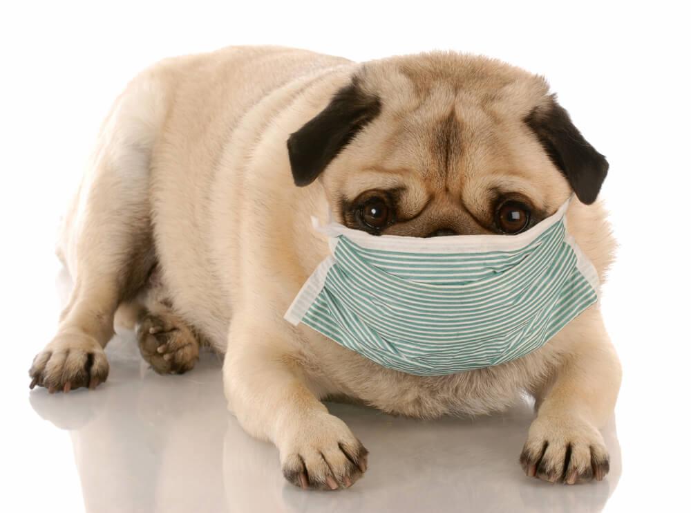 Novi koronavirus - se pes lahko okuži?