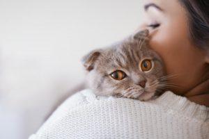 Mačke so prav tako zveste kot psi, pravi raziskava