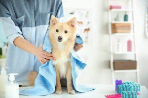 Nega psa doma ali obisk pasjega salona?