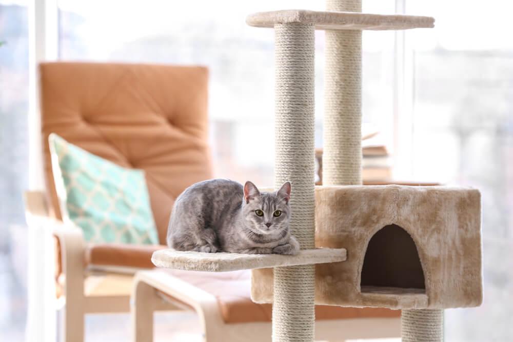 Notranje mačke in kako jim popestriti okolje