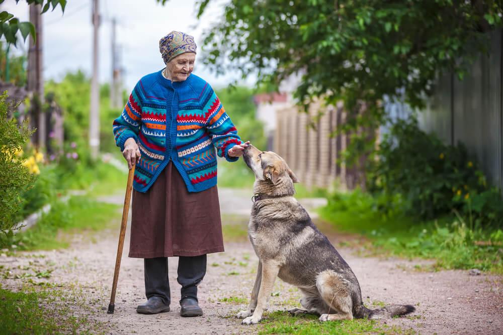Ukrajinski politik: ''Prodaj psa, pa boš lahko plačala račune''