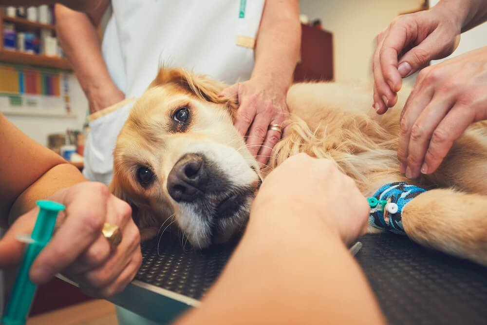 Na 112 mora biti dosegljiva tudi nujna veterinarska pomoč