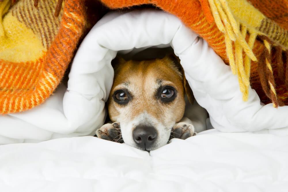 Prehlad pri psu - kdaj k veterinarju?