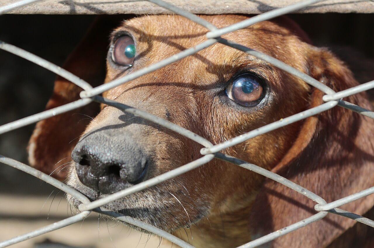 Na ravni EU se obeta obvezna registracija psov in mačk