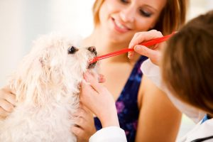 Ščetkanje zob pri psu je potrebno