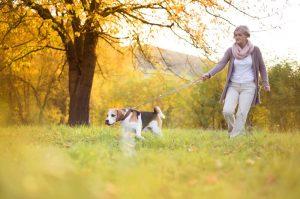 Sprehajanje psa na povodcu je lahko nevarno za starejše ljudi