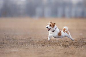 Vadba: koliko jo potrebuje pes vsak dan?