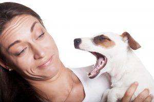 Vsaj pes ima svoj vonj