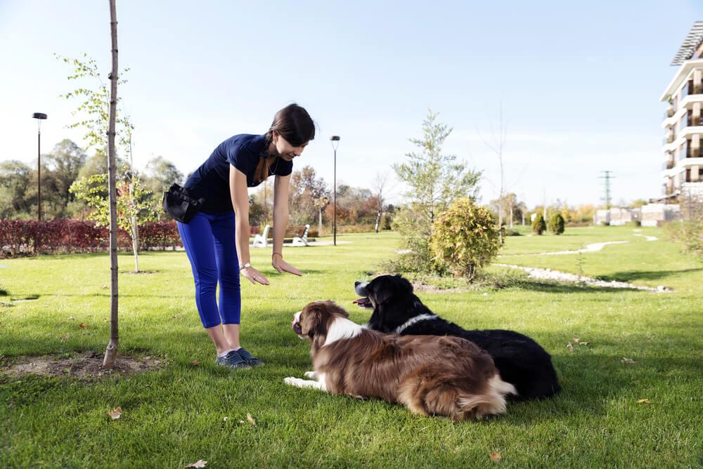 Vzgoja psa: 10 najbolj pogostih napak