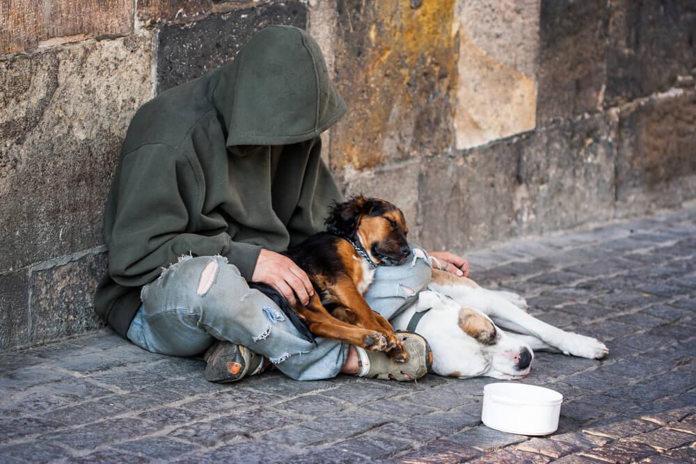 Škotsko zavetišče za brezdomce pozdravlja tudi njihove pse