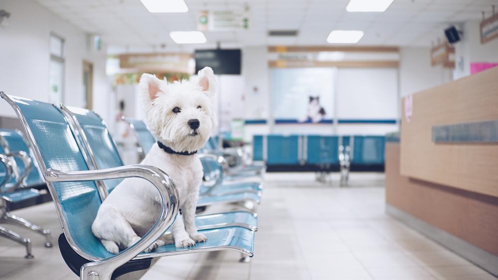 Navodila za lastnike ob obisku veterinarske klinike v času COVID-19
