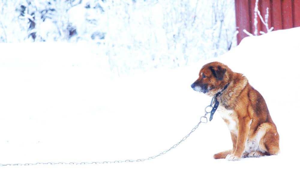 Kdaj lahko inšpektor odredi odvzem psa?